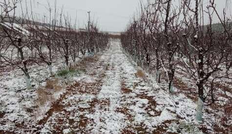 Αποστόλου: «Να αποζημιωθούν οι πληγέντες από τα χιόνια αγρότες»